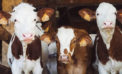 $2 billion(!) payment to dairy farmers all about politics