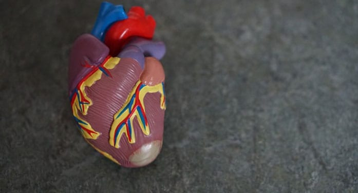 Protein that blocks body's ability to clear bad cholesterol identified